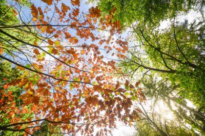 AG Umwelt-, Natur- und Klimaschutz @ Jitsi