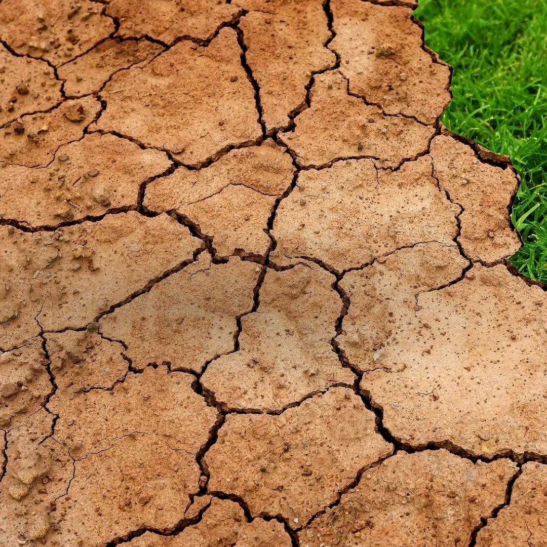 Grüne zum Bundesverfassungsgerichtsurteil über das Klimagesetz