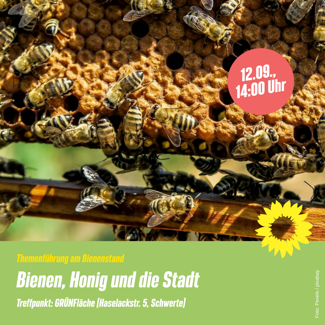Bienen, Honig und die Stadt: Themenführung für Groß und Klein
